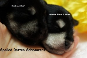 phantom-black-and-silver-vs-black-and-silver-8